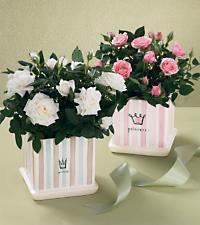 The FTD® Baby Princess Rose Planter