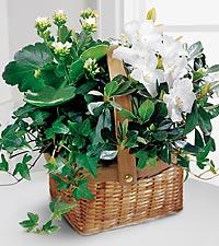The FTD® White Assortment Basket