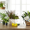 The FTD® Florist Designed Blooming and Green Plants in a Basket
