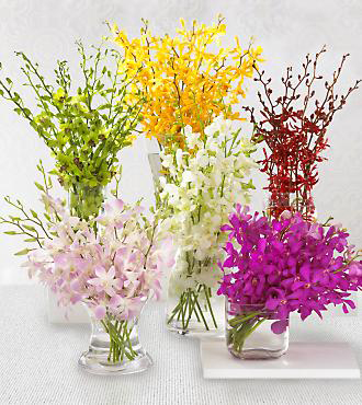 Monthly Orchid Plan - 3 Months