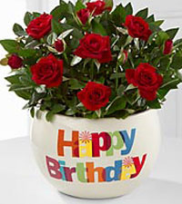 20 Stems Red Tulips with FREE Vase