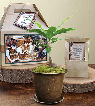 Seeds of Life Memory Tree
